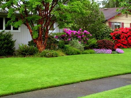 Ile czasu potrzeba by mieć piękny trawnik w ogrodzie? Jeden dzień